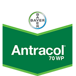 Export Αntracol 70WP 500gr