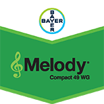 Melody Compact WG 1kg
